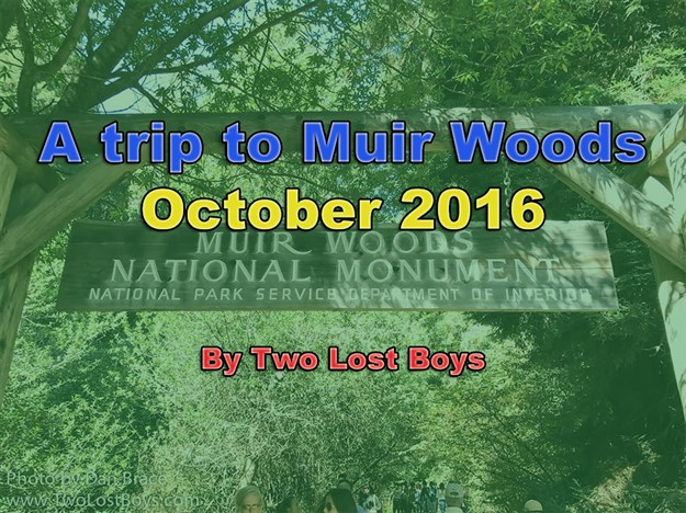A trip to Muir Woods, October 2016